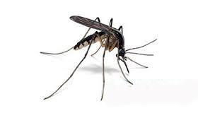 Taubaté fecha fevereiro com redução histórica de casos de dengue
