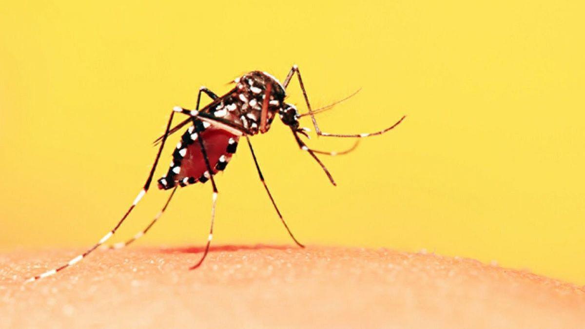 Alerta | Estado reforça risco de casos de Febre Amarela em Taubaté e região